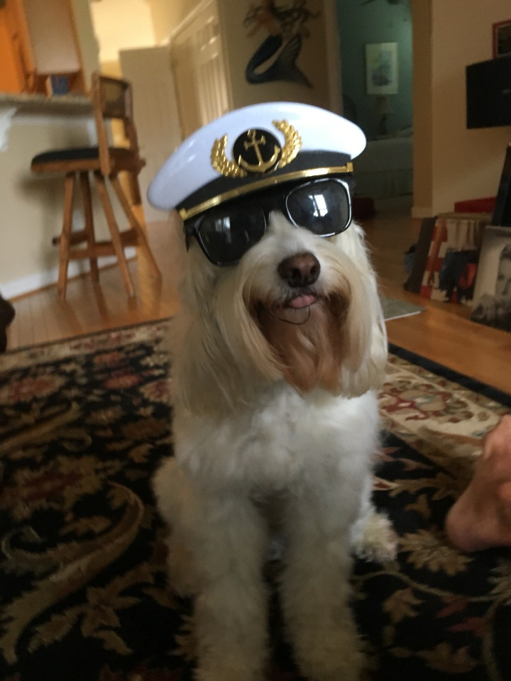 We're trying to encourage Lewes to go out on our boat, but he's not very fond of water. Maybe these sunglasses will help!